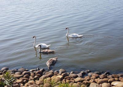 Dyrene i vandet